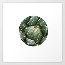 Cactus Succulent Plant art Modern art Scandinavian circle Art Print