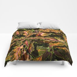 Coleus Foliage Comforters