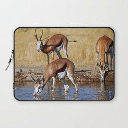 Springboks in Botswana, wildlife Laptop Sleeve