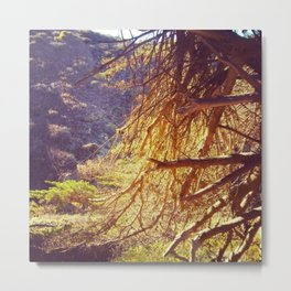 Pfieffers Forest Metal Print