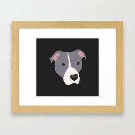 Grey and White Pit Bull Framed Art Print