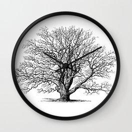 oak tree botanical no2 Wall Clock