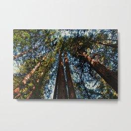 Muir Woods- horizontal Metal Print