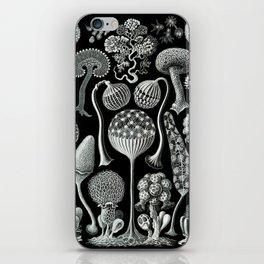 Ernst Haeckel - Mycetozoa (black) iPhone Skin
