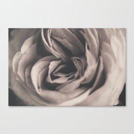 A vintage rose Canvas Print