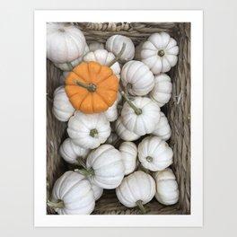White Ghost Pumpkin and sneaky orange galore fall harvest sneaky orange   Art Print