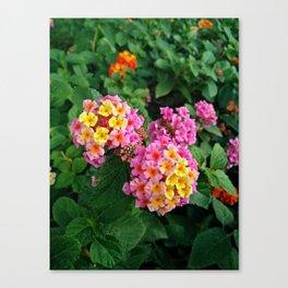Lantana camara garden Canvas Print