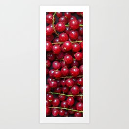 Red Currant Oil Painting Art Print