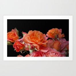 Pink Roses Black Background Art Print