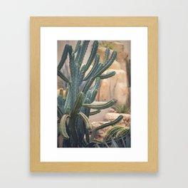 Cactus Jungle II Framed Art Print