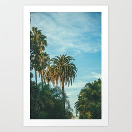 San Diego Palm Trees Art Print