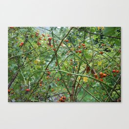 Red berry tangle Canvas Print