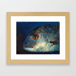 Snapper Boy Framed Art Print