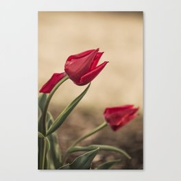 RED ARE ROSES Canvas Print