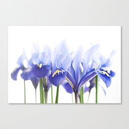 Bue Iris 2 Canvas Print