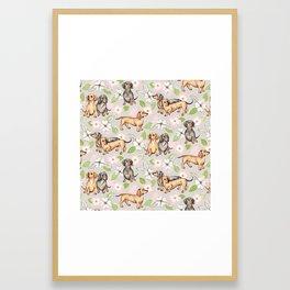 Dachshunds and dogwood blossoms Framed Art Print