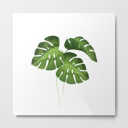 Three Monstera Leaves on White Metal Print
