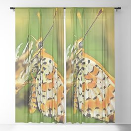 Spotted Fritillary Orange and White Butterfly Sheer Curtain
