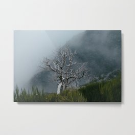 Lonely Tree Remains Metal Print