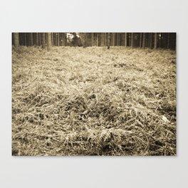 Bracken in the forest Canvas Print