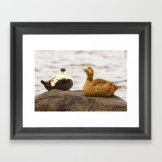 Mr and Mrs Eider Framed Art Print