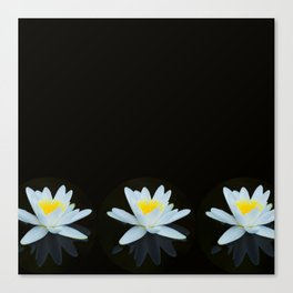 Waterlily Flowers On Black Background #decor #society6 #buyart Canvas Print