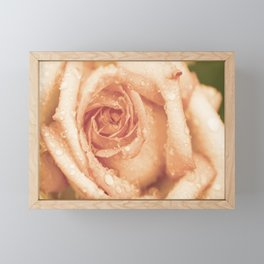 Rose with tears in apricot Framed Mini Art Print