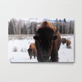 Little Bison Metal Print