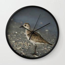Black Bellied Plover Wall Clock