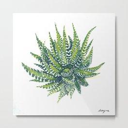 haworthia succulent Metal Print