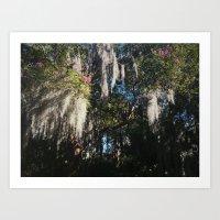 Spanish Moss. Charleston, SC Art Print