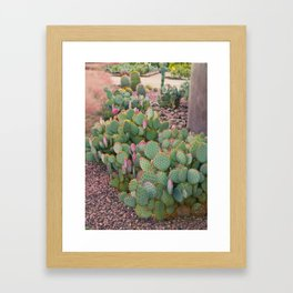 Prickly Pear Cactus Arizona Framed Art Print