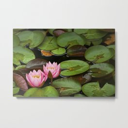 Pink Lily Pads with Blossoms on a Michigan Pond Metal Print