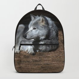 Gray Wolf at Rest Backpack