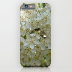 Be in a cocoon iPhone 6s Slim Case