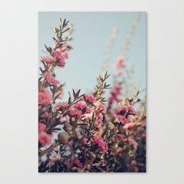 Tea Flower Tree Canvas Print