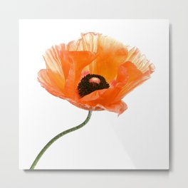 poppy flower IV Metal Print