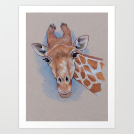 Giraffe: Color Pencil Drawing or a Giraffe Looking at You Art Print