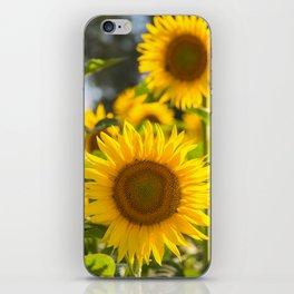 Sunflowers happiness iPhone Skin