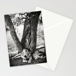 African Safari Lion Stationery Cards