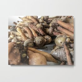 Close up shot of finger-roots on white background. Metal Print