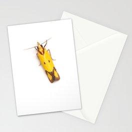 Sulphur Knapweed Moth (Agapeta zoegana) Stationery Cards