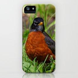 A Curious American Robin iPhone Case