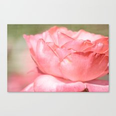Peachy Pink Rose Canvas Print