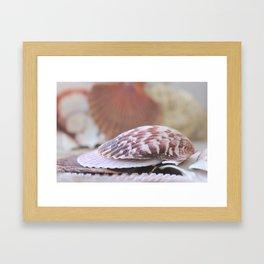 Seashell Collection Still Life Photograph Framed Art Print