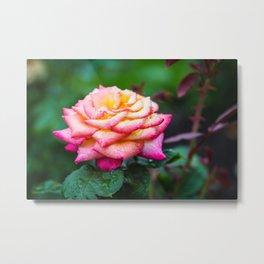 Rose, Columbus Ohio Metal Print