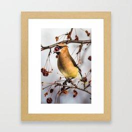 Cedar Waxwing Open Wide Framed Art Print