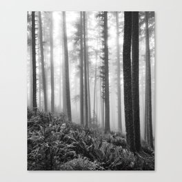 Misty Forest (black and white) Canvas Print