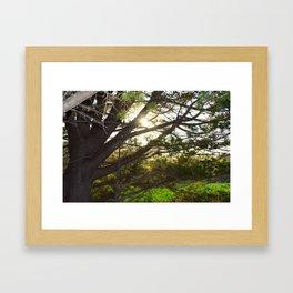 sunset through tree Framed Art Print