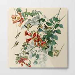 Vintage Hummingbird Illustration - Birds of America Metal Print
